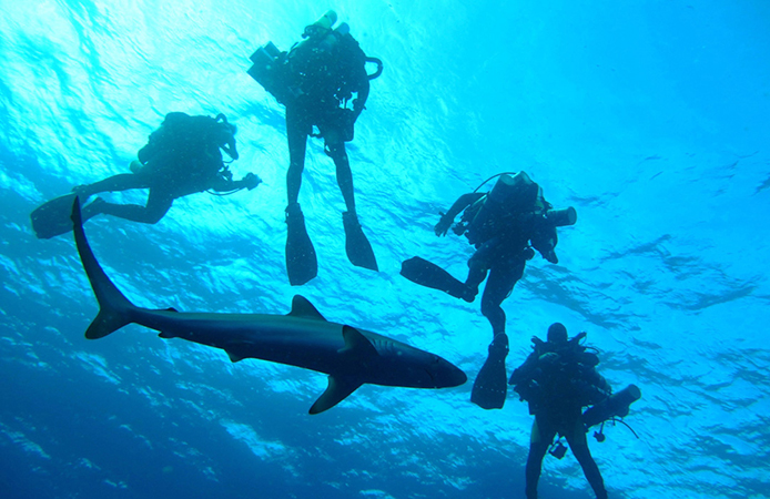 divers-group-discount
